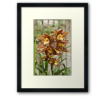 Orchids in bloom  Framed Print