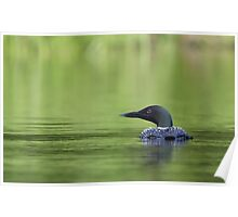 Cool and green and shady - Common loon Poster