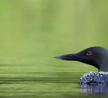 Cool and green and shady - Common loon Sticker