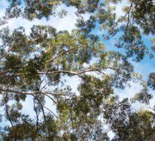 Sky Through Karri Trees Sticker