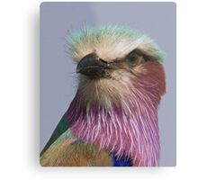 Lilac Breasted Roller Close Up  Metal Print