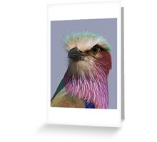 Lilac Breasted Roller Close Up  Greeting Card