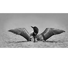 Common loon in black and white Photographic Print