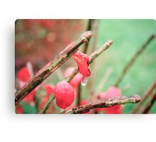 Frozen Red Leaf Canvas Print