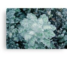 Frozen Plant Canvas Print