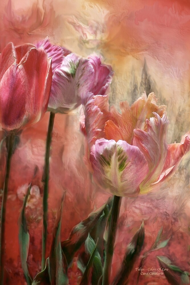 Tulips - Colors Of Love by Carol  Cavalaris