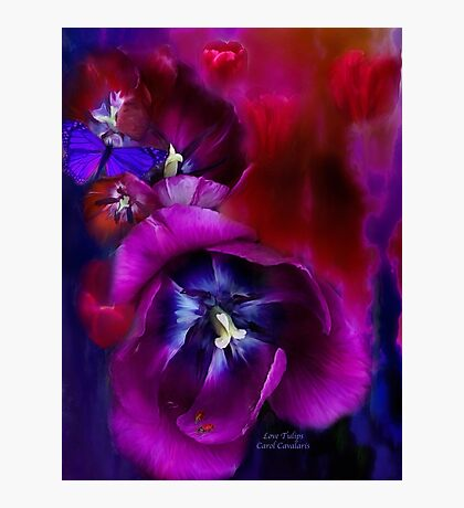 Love Tulips Photographic Print