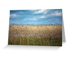 Field of reed Greeting Card