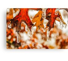 Frozen Leaves on a Tree Canvas Print