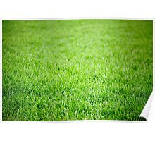 Green grass field background Poster