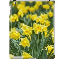 Daffodils field iPad Case/Skin