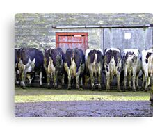 Bare Behinds!! Canvas Print