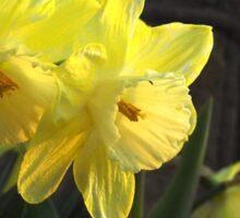 Spring Sunshine Sticker