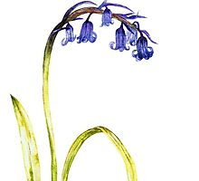 Ink Bluebell Painting (Original Artwork) by Katy177