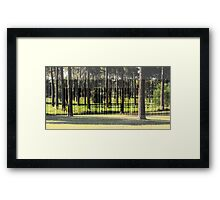A Stand of Pines Framed Print