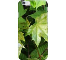 green of spring iPhone Case/Skin