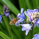 Bee & Bluebells by AnnDixon