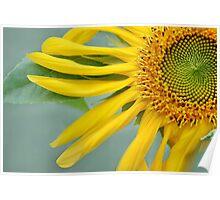 Floral Pinwheel Poster