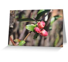 Quince Buds Greeting Card