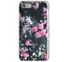 Rose bush  iPhone Case/Skin