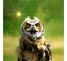 Twinkle twinkle little owl Photographic Print