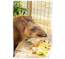 Tapir in a Zoo Poster