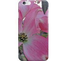 Dogwood in Spring iPhone Case/Skin
