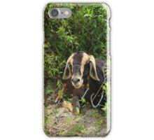 Goat Under a Bush iPhone Case/Skin