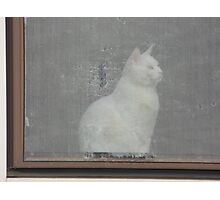 THE WHITE CAT Photographic Print