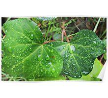 Leafy Rain Drops Poster
