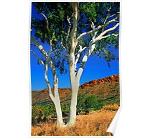 Ghost Gum - Alice Springs Poster
