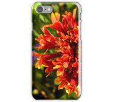 Beautiful colorful red flower in the garden. iPhone Case/Skin