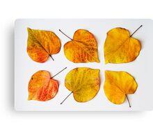 Leaf heart Canvas Print