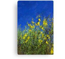 Broom Shrubs under Blue Sky Canvas Print