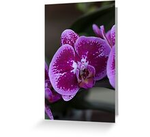 orchid in the garden Greeting Card