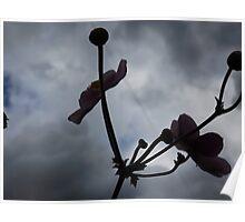 flowers still bloom Poster