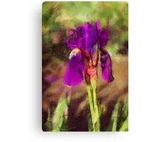 Iris in a Garden Canvas Print