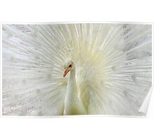 The White Peacock Poster