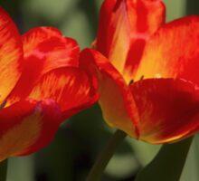 Fiery Tulips Sticker