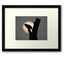 Blackbird singing in the dead of night Framed Print