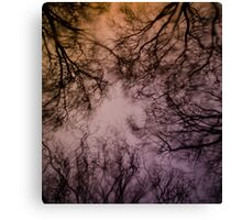 Looking through wet glass at the tree tops Canvas Print