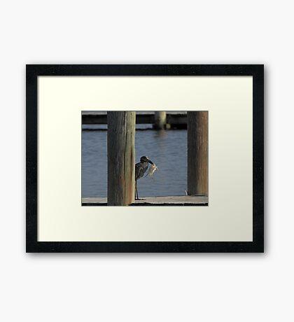 Black heron with crab Framed Print