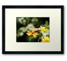 Butterfly on yellow flower Framed Print