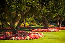 Three Trees - Butchart Gardens by Yannik Hay