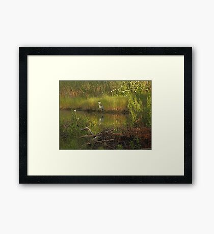 Heron in rich colors Framed Print