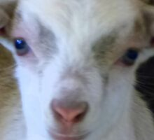 """OUR GOAT """"PEARL"""" Sticker"""