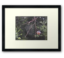 Persimmon Web Framed Print