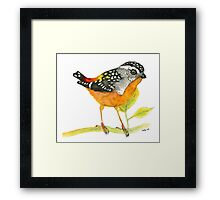 Spotted Pardalote - Colorful Bird Framed Print