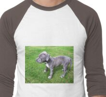 Gorgeous Baby, Blue Pit Bull Puppy Dog With Wrinkles Men's Baseball ¾ T-Shirt