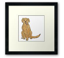 The Dog From Strays Framed Print